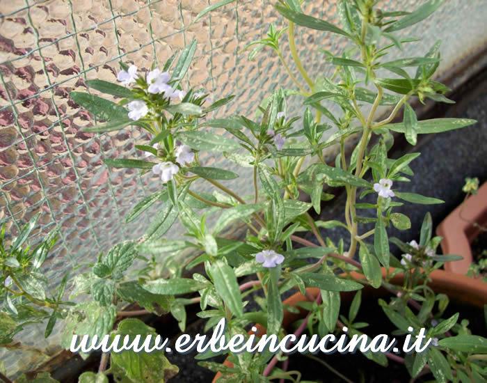Erbe in cucina dalle semine autunnali raccolti d inverno