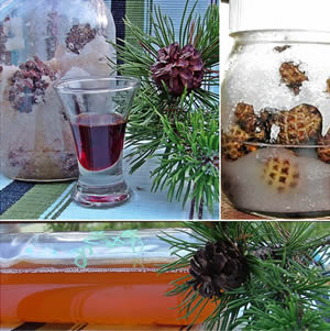 Mountain pine syrup and Mountain pine grappa