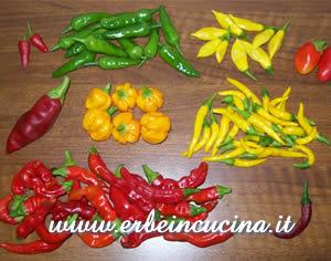 Erbe in cucina il raccolto di ottobre - Santolina in cucina ...