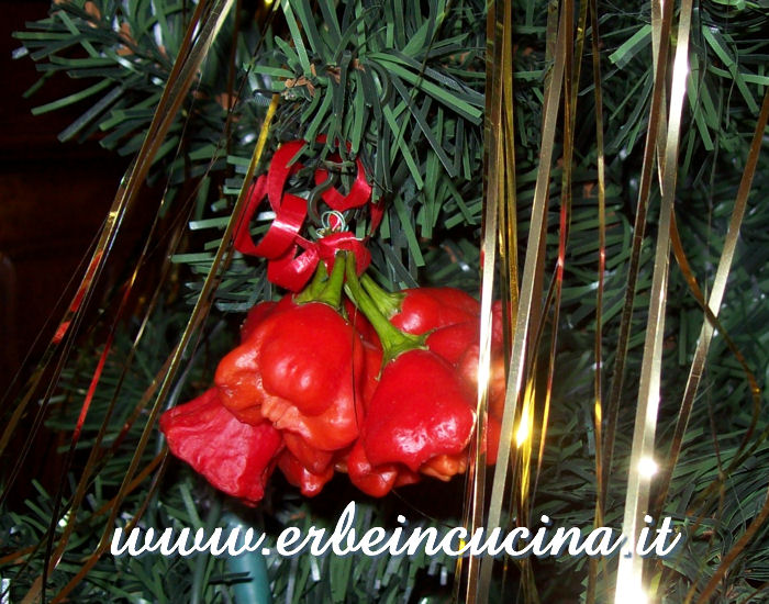 Christmas Rocotillo Decoration