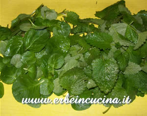 White mint and lemon balm