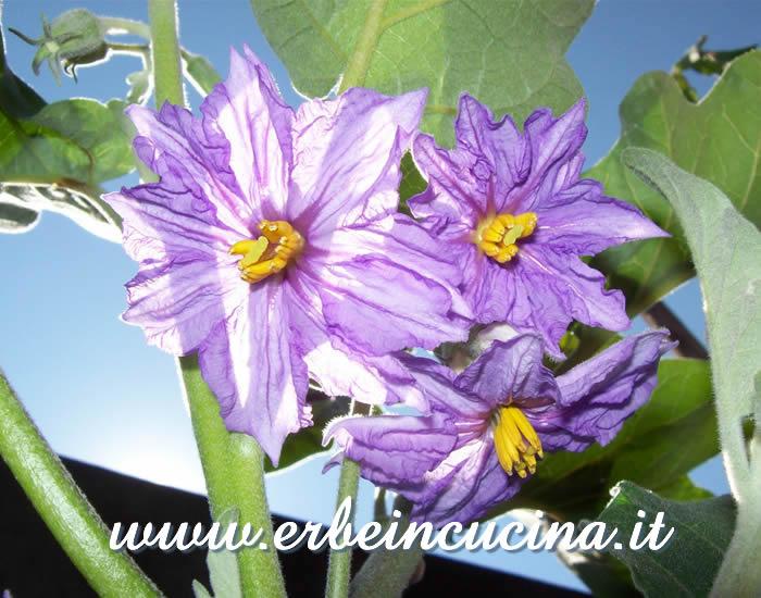 Best melanzana bianca cucina ideas - Cucina color melanzana ...