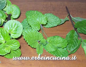 Lemon Balm and Mint
