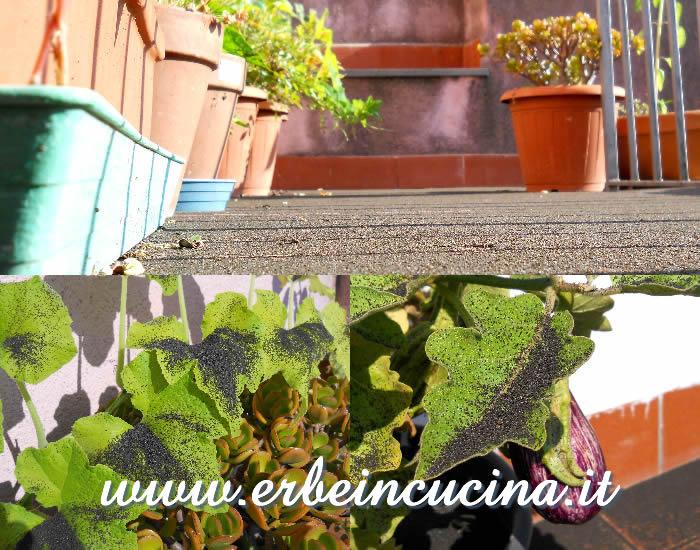 Erbe in cucina agosto in terrazzo le piante durante le for Cenere vulcanica